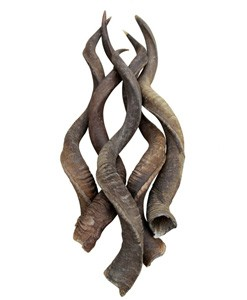 Geweien schedels Hoorns