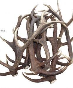 red-deer-antler-medium-size-