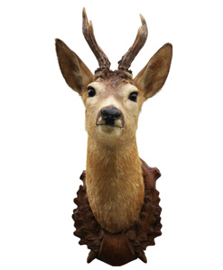 Home decoration wildlife taxidermy
