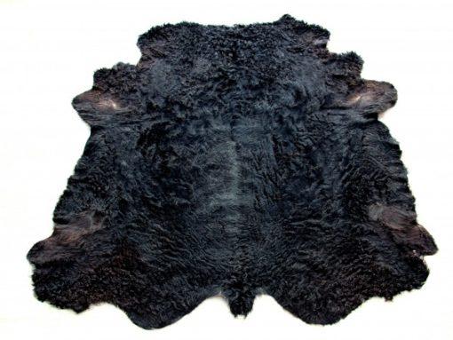 zwarte-galloway-stierenvacht-