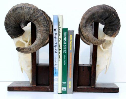 boekensteun met ram schedel gewei