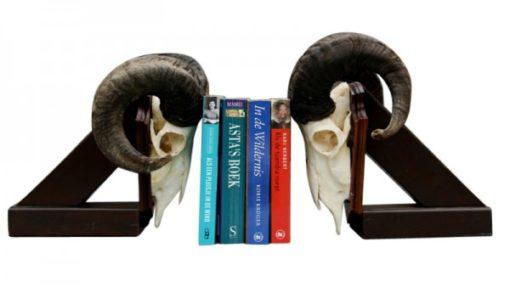 boekensteun -met- ram -schedel- gewei