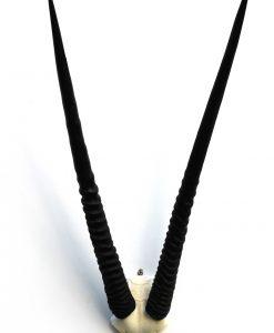 gewei-decoratie-oryx-lange hoorns-schedeldak-wandklaar