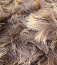 detail foto ijslandse schapenvacht quatro