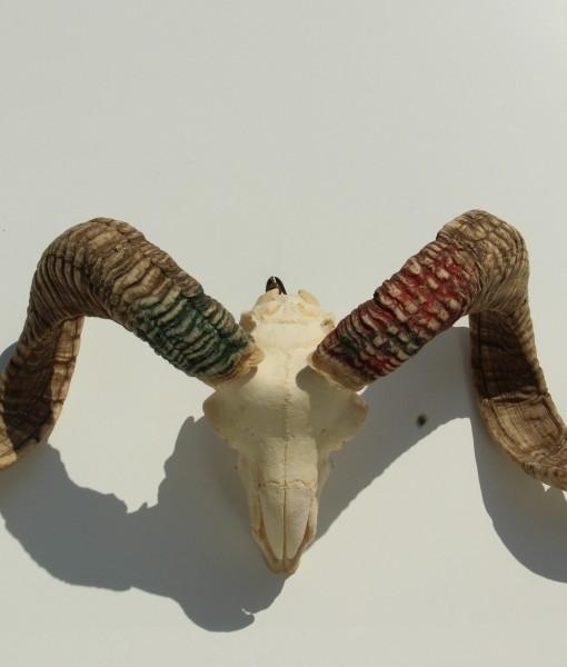 ram schedel nr 18