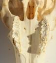 ram tanden 18