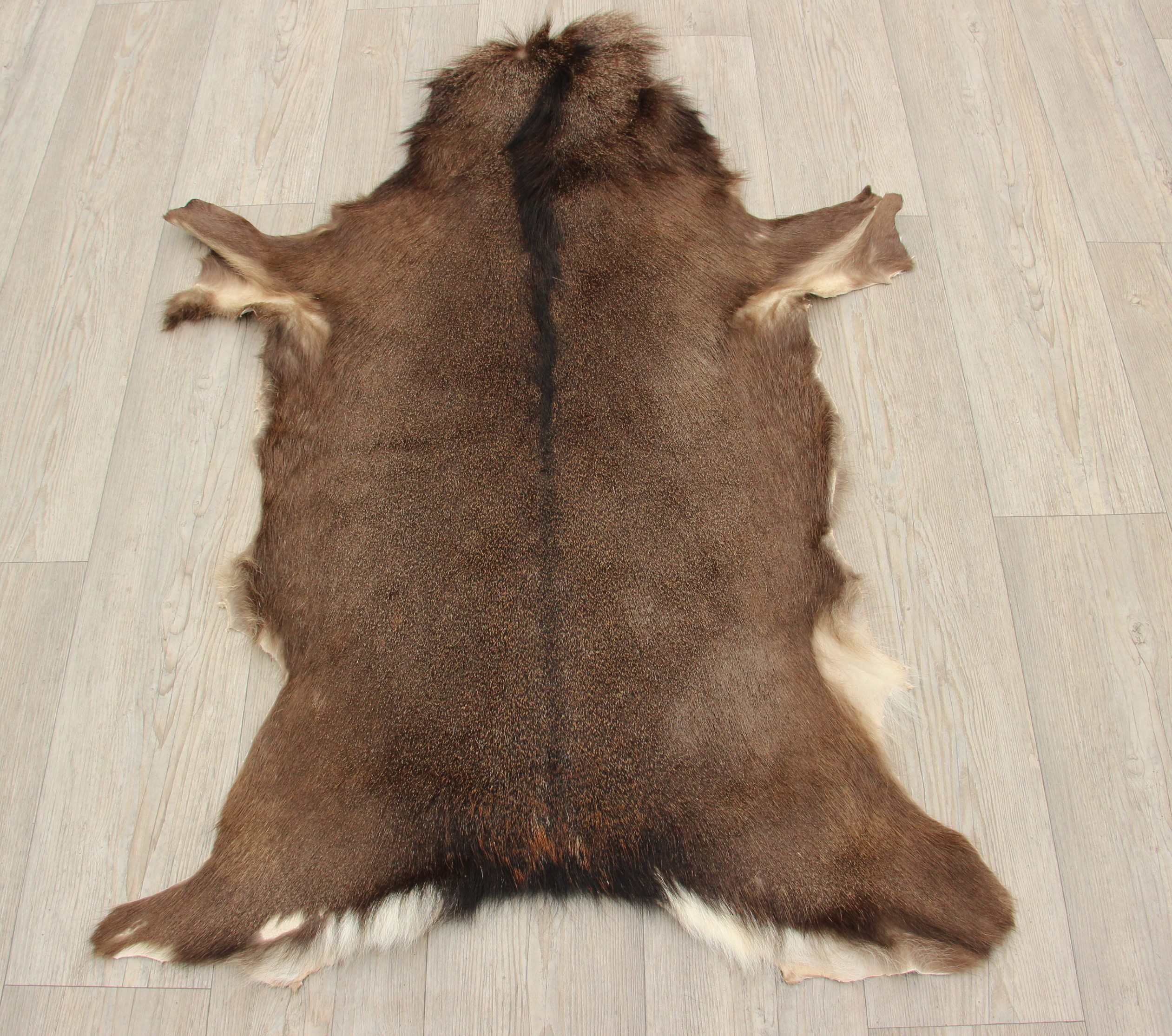 Sika Deer Hide Rug Nr 2 Het Millushandelshuis