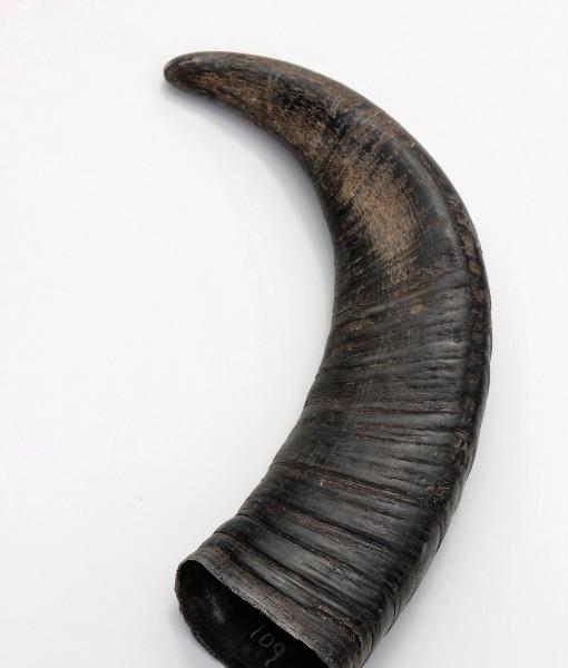 waterbuffel hoorn  109