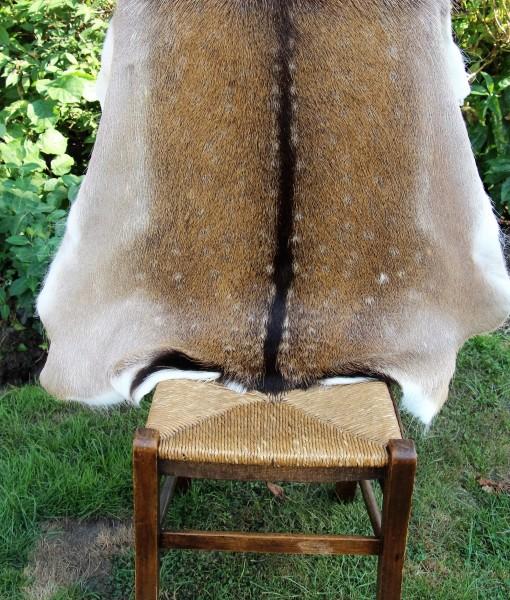 Damhert-hert-huid-vacht-vel-kleed-tapijt-dierenhuid-dierenvel-hertenhuid-hertenvel-gevlekte -huid-bambi-vachtje,damherthuid-damhertenhuid-damhertvel-jacht-jager-