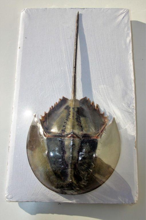 degen- krab