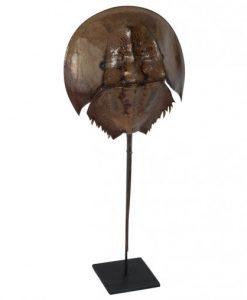 degencrab-horseshoe-crab