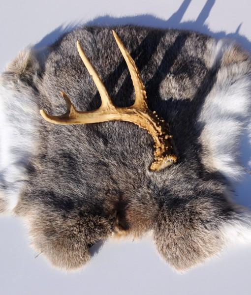 konijnenvacht-decoratie-met-gewei-nr-3