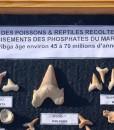 fossiles-du-maroc
