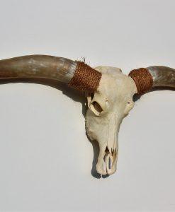 longhorn-schedel-hoorns-nr-212-xxl