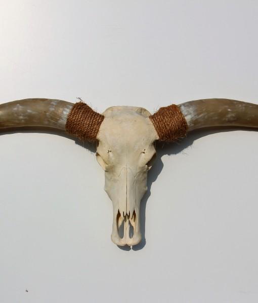 Longhorn design nr 212 158cm super dikke hoorns het for Schedel hoorns