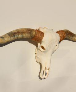 longhorn-longhorndesign-hmh-artwork-
