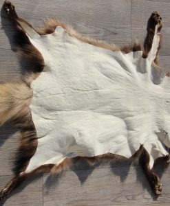 nok-marterhund-marterhond-jacht-.J (3)