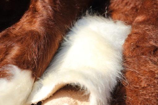 detail-hereford-stierenhuid-bruin-wit