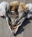 masker-mask-face-coyote-reenactment-western-larp