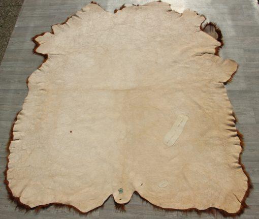 schotse-hooglander-bruin-stierenhuid. (2)