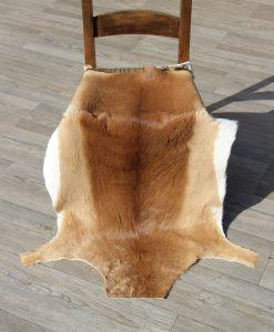 impala-antilope-impala-vel-impalavacht-impalahuid