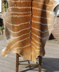 nyalahuid-african-nyala-hide-antilope-gestreepte-vacht-het-millus-handelshuis-