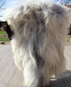 schapenvacht-1624-grijs-langharig-heide-schaap-