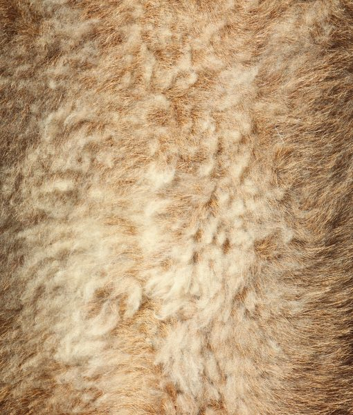 schapenvacht-kameroen-cameroon