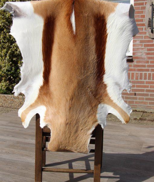 springbok-huid-nr 5. (2)