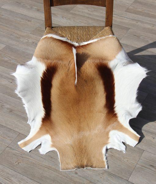 springbok-huid-vel-afrika-antilope-4