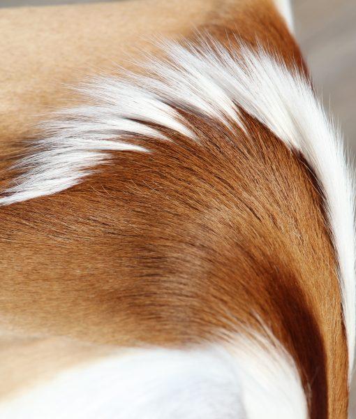 springbok-huid-vel-afrika-antilope-1