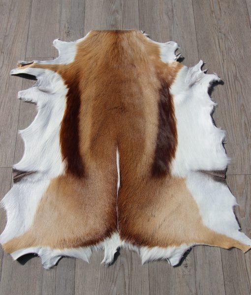 springbok-huid-vel-vacht-6