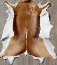 springbok-huid-vel-vacht-8 (2)