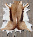 springbok-huid-vel-vacht-9- het-millus-handelshuis