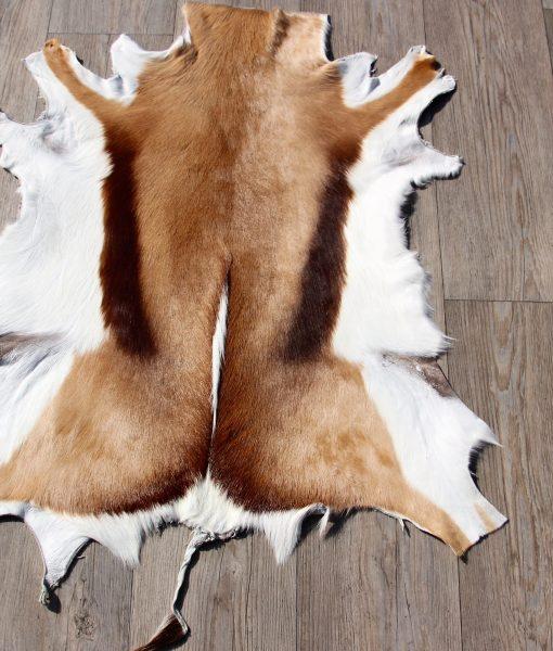 springbok-huid-vel-vacht-9 (2)