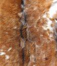 geitenvel-geitenhuid-geitenvacht-decoratie (12)