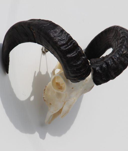 ram-gewei-skull-bok-32 (4)