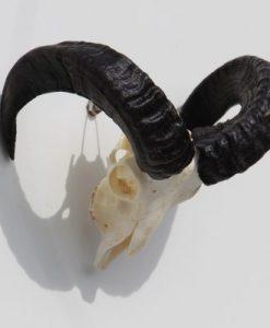 ram-gewei-skull-bok-32