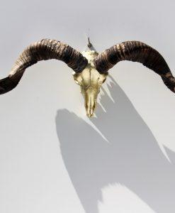 ram-bok-gewei-bokken- schedel -goud-met- lange -hoorns