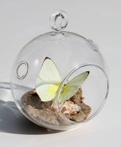 echte-vlinder-in-glazen-bol, kan zowel staan als hangen