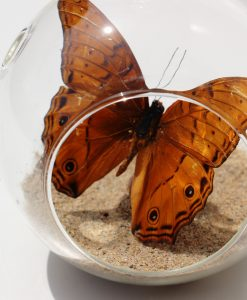 vlinder in decoratief bolglas