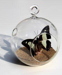 vlinder-nr-5-opgezet