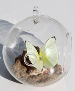 echte-vlinder-in-glazen-bol