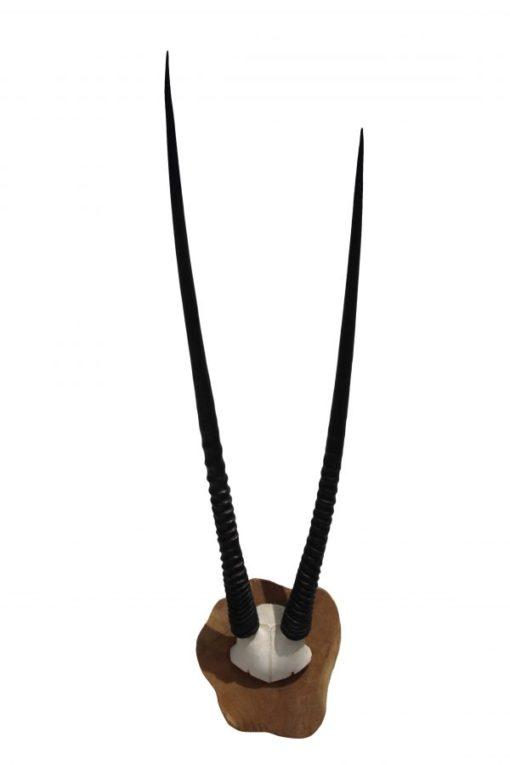 oryx-gemsbok-gewei-hoorns-zwart-op hout