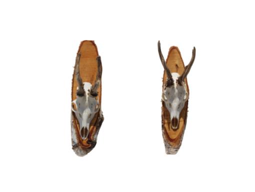 reebok-gewei-duo-berkenhout