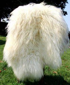 schapenvacht-langharig-heideschaap