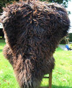 schapenvacht-zwart-langhaar-melerade-donja