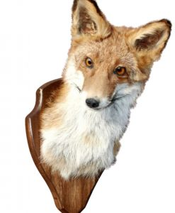 vos-opgezette-vos-taxidermy-museum-kwaliteit-