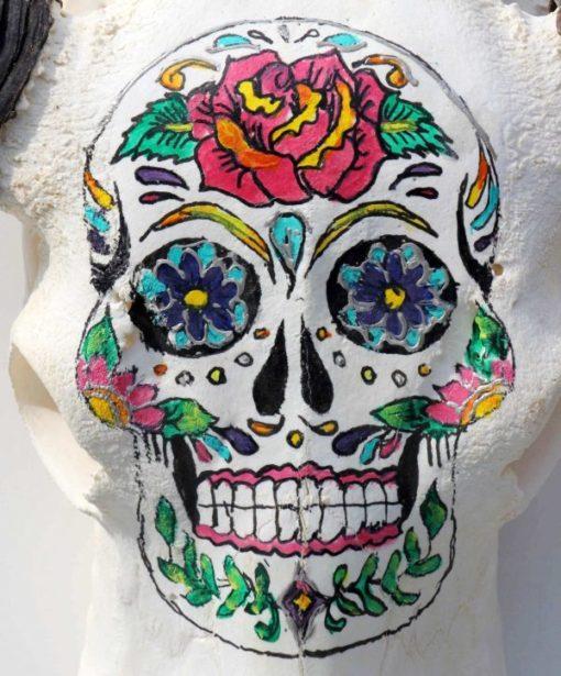 waterbuffel schedel-handgeschilderd-skull-