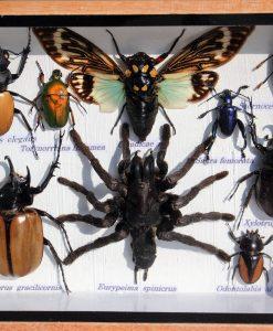 insecten-mix-in box-met houten - lijst